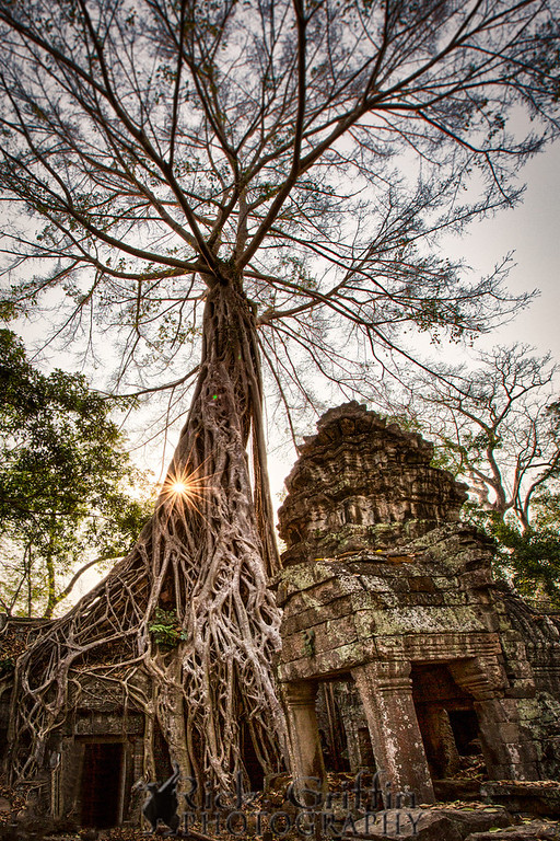 Ta Phrom, Angkor, Cambodia.  Roots of the Sprung tree