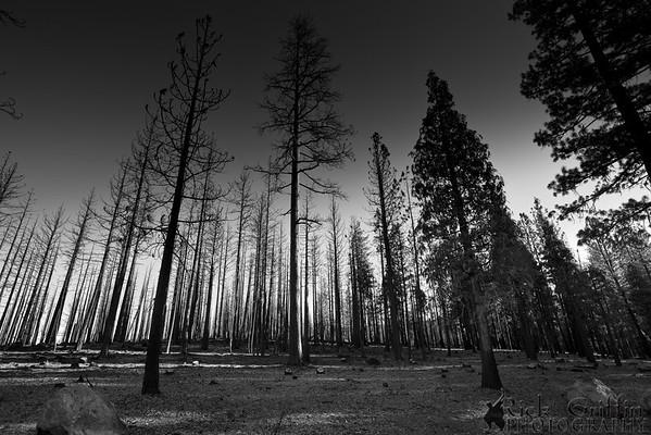 Lassen National Forest, California